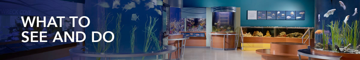 What to See and Do | South Florida Science Center and Aquarium